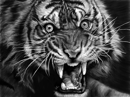 L'éveil du Tigre