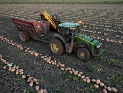 Que récolter à la vente d'une terre agricole