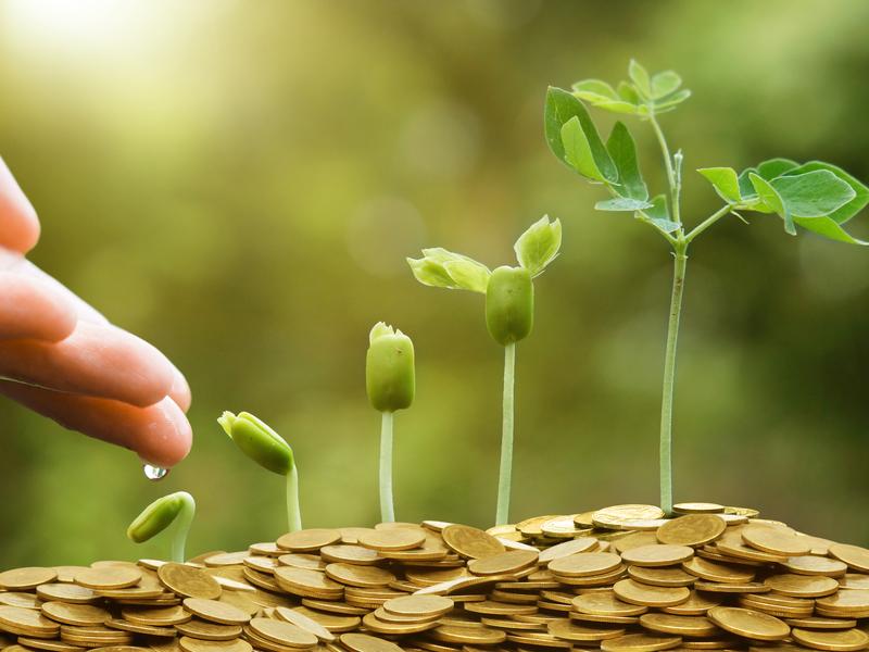 Des petites plantes qui poussent dans un par terre de pièces d'or. Une main en prend soin.