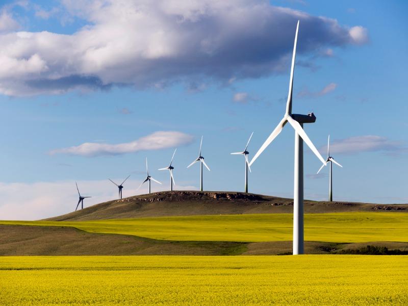 Des éoliennes dans un champ ensoleillé.